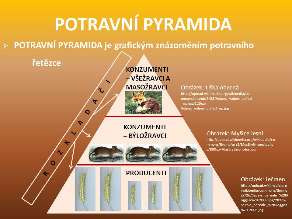 POTRAVNÍ PYRAMIDA POTRAVNÍ PYRAMIDA je grafickým znázorněním potravního řetězce. KONZUMENTI – VŠEŽRAVCI A MASOŽRAVCI.