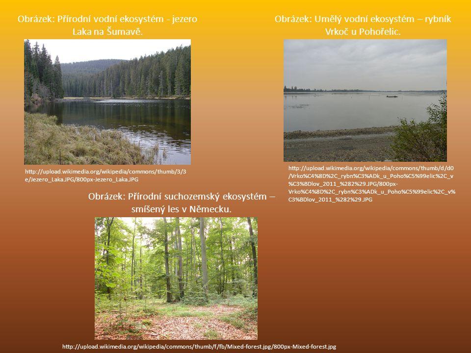 Obrázek: Přírodní vodní ekosystém - jezero Laka na Šumavě.