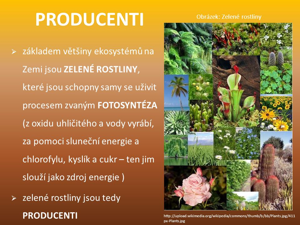 Obrázek: Zelené rostliny