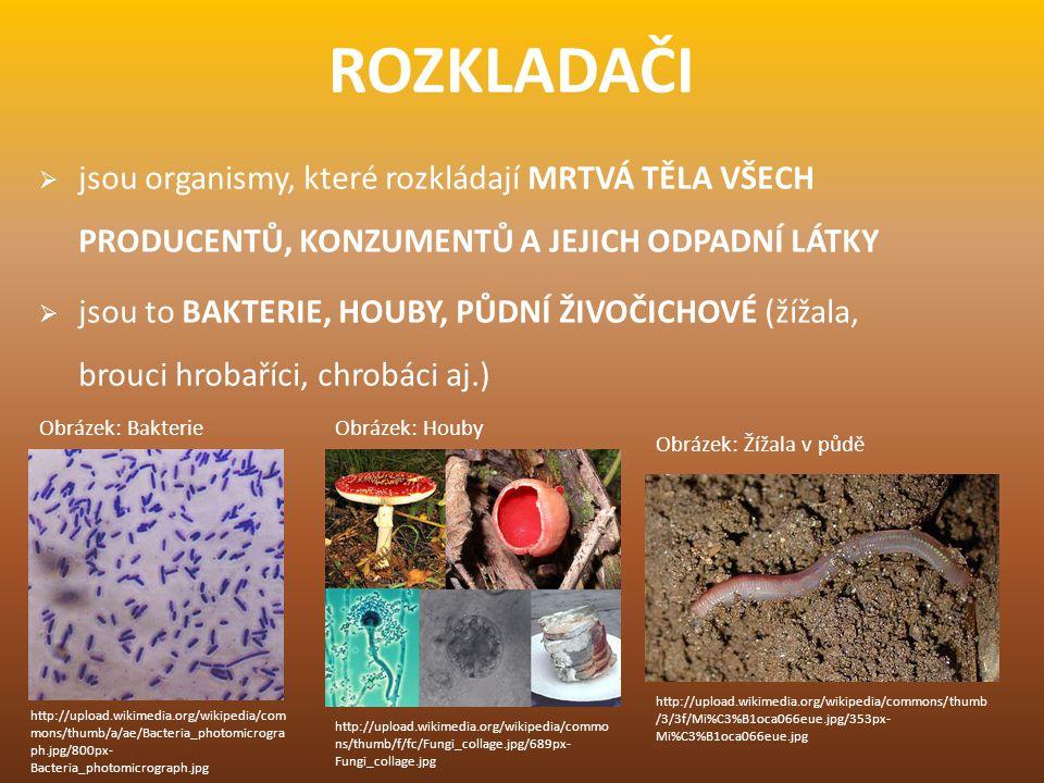 ROZKLADAČI jsou organismy, které rozkládají MRTVÁ TĚLA VŠECH PRODUCENTŮ, KONZUMENTŮ A JEJICH ODPADNÍ LÁTKY.