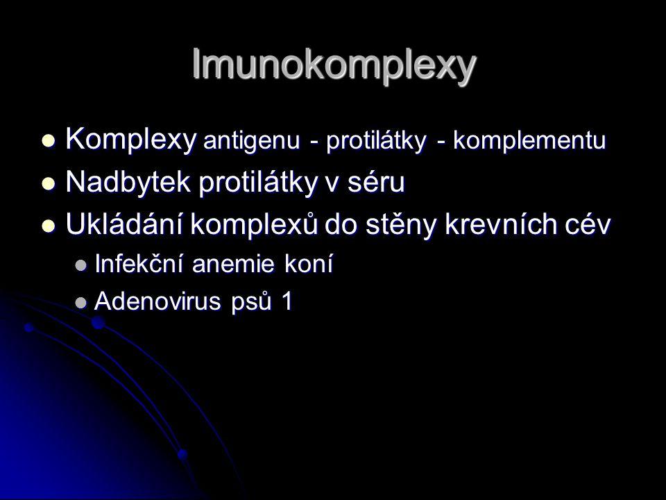 Imunokomplexy Komplexy antigenu - protilátky - komplementu