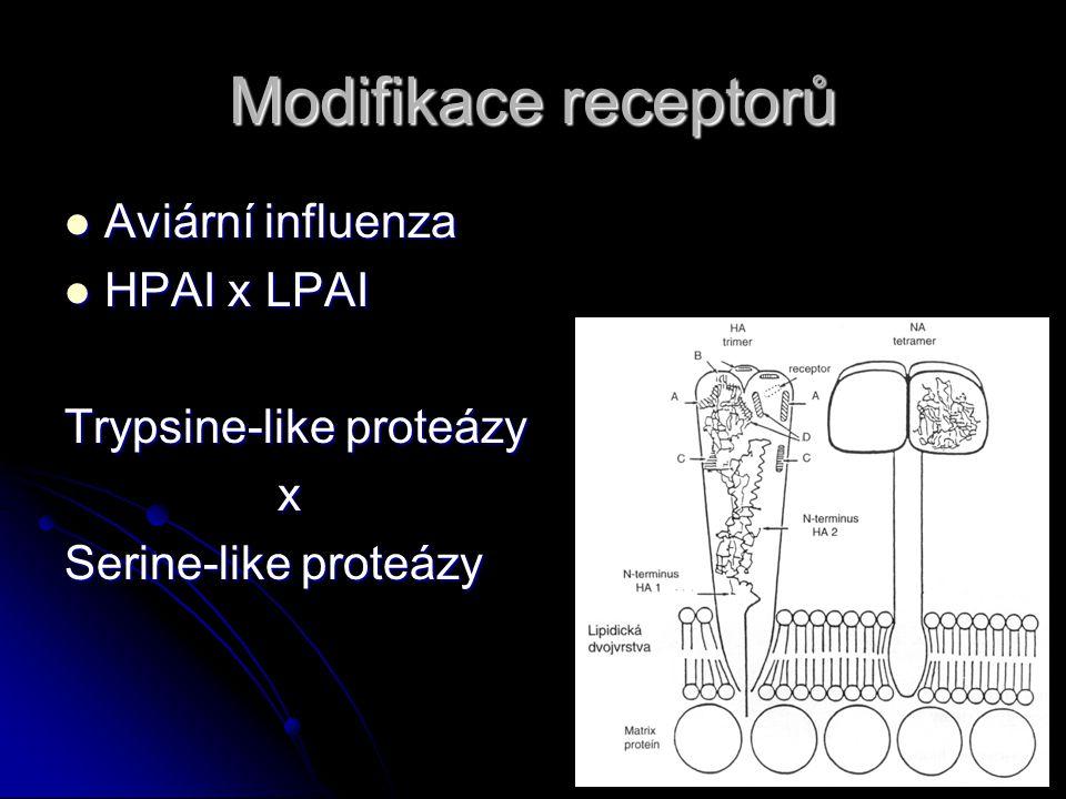 Modifikace receptorů Aviární influenza HPAI x LPAI