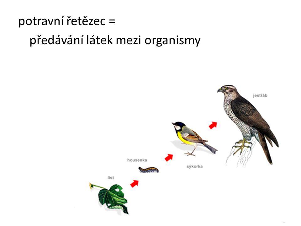 potravní řetězec = předávání látek mezi organismy