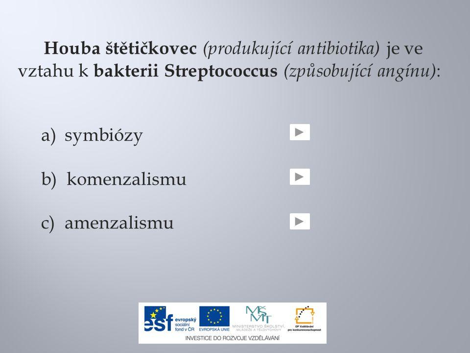 Houba štětičkovec (produkující antibiotika) je ve vztahu k bakterii Streptococcus (způsobující angínu):