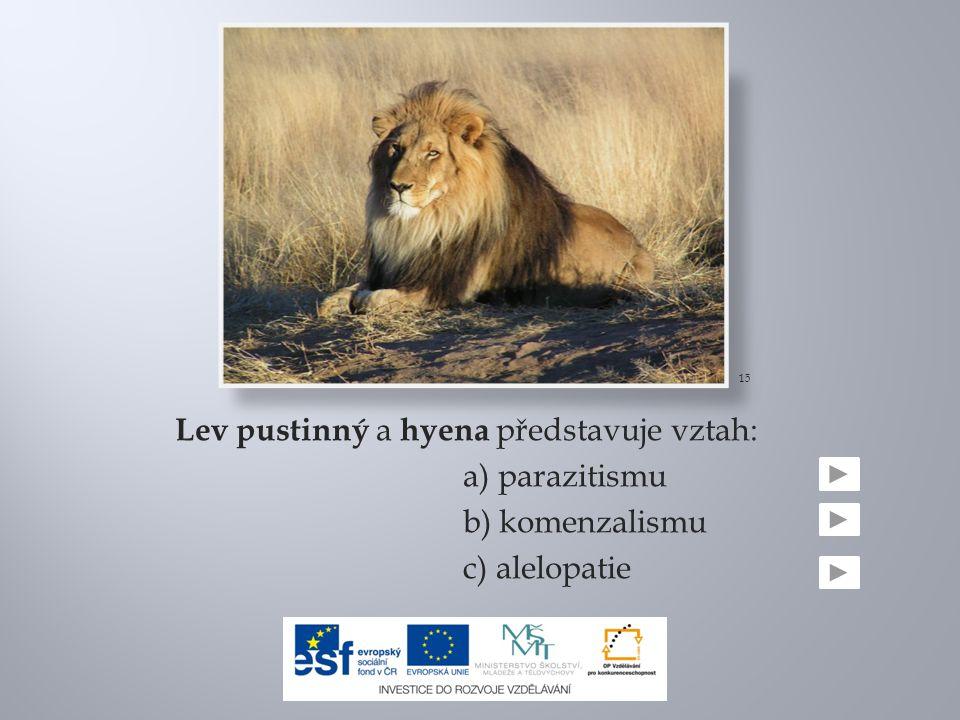 Lev pustinný a hyena představuje vztah: a) parazitismu b) komenzalismu