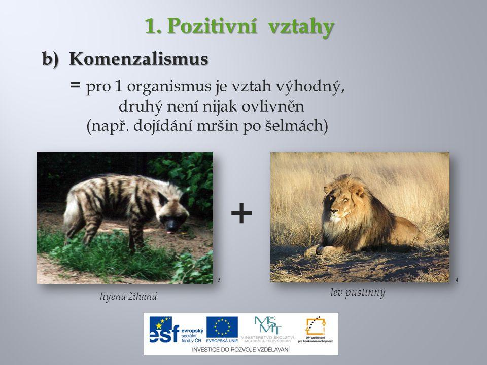 + 1. Pozitivní vztahy b) Komenzalismus