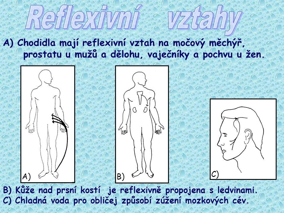 Reflexivní vztahy A) Chodidla mají reflexivní vztah na močový měchýř, prostatu u mužů a dělohu, vaječníky a pochvu u žen.