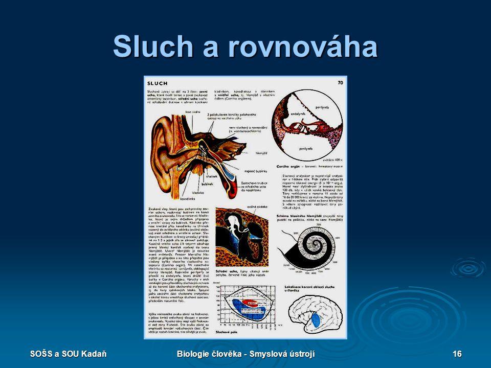 Biologie člověka - Smyslová ústrojí