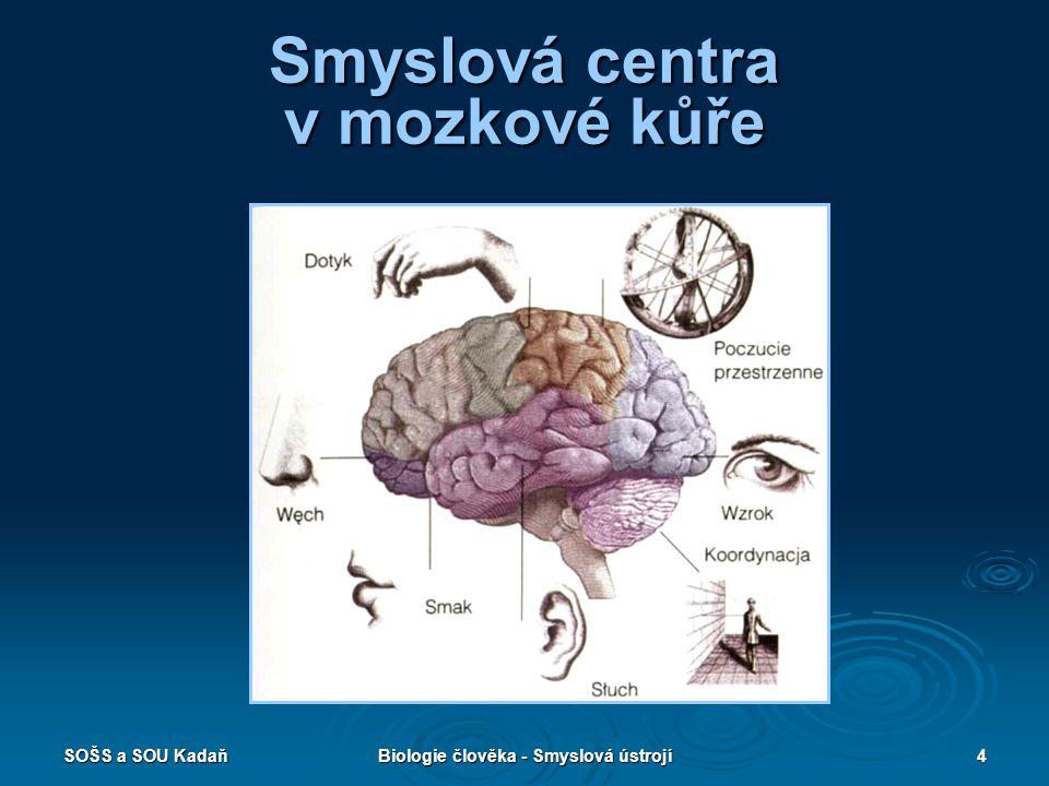 Smyslová centra v mozkové kůře
