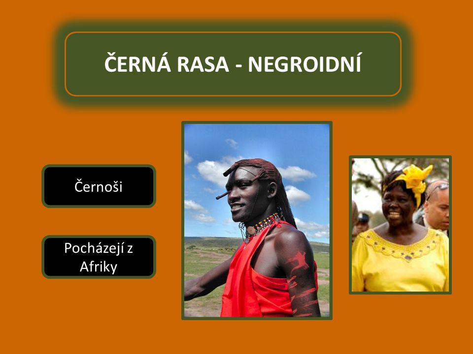 ČERNÁ RASA - NEGROIDNÍ Černoši Pocházejí z Afriky