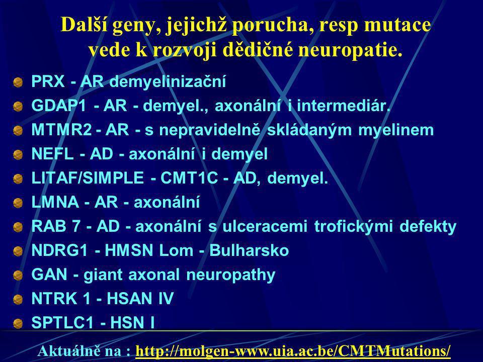 Další geny, jejichž porucha, resp mutace vede k rozvoji dědičné neuropatie.