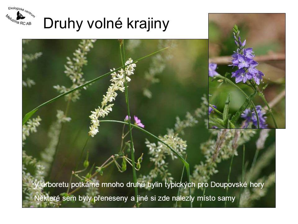 Druhy volné krajiny V arboretu potkáme mnoho druhů bylin typických pro Doupovské hory.