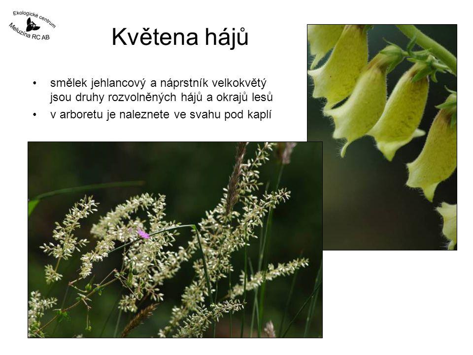 Květena hájů smělek jehlancový a náprstník velkokvětý jsou druhy rozvolněných hájů a okrajů lesů.