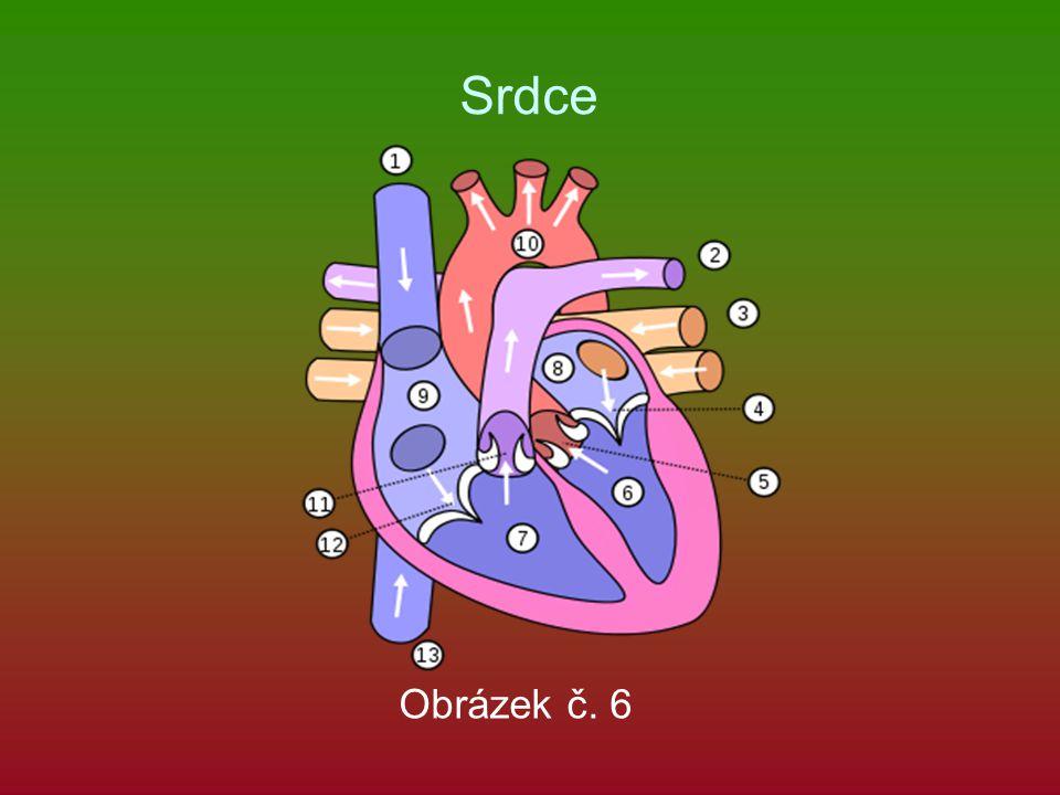 Srdce Obrázek č. 6