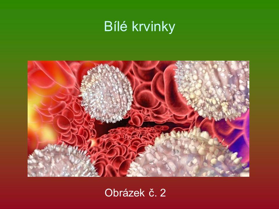 Bílé krvinky Obrázek č. 2