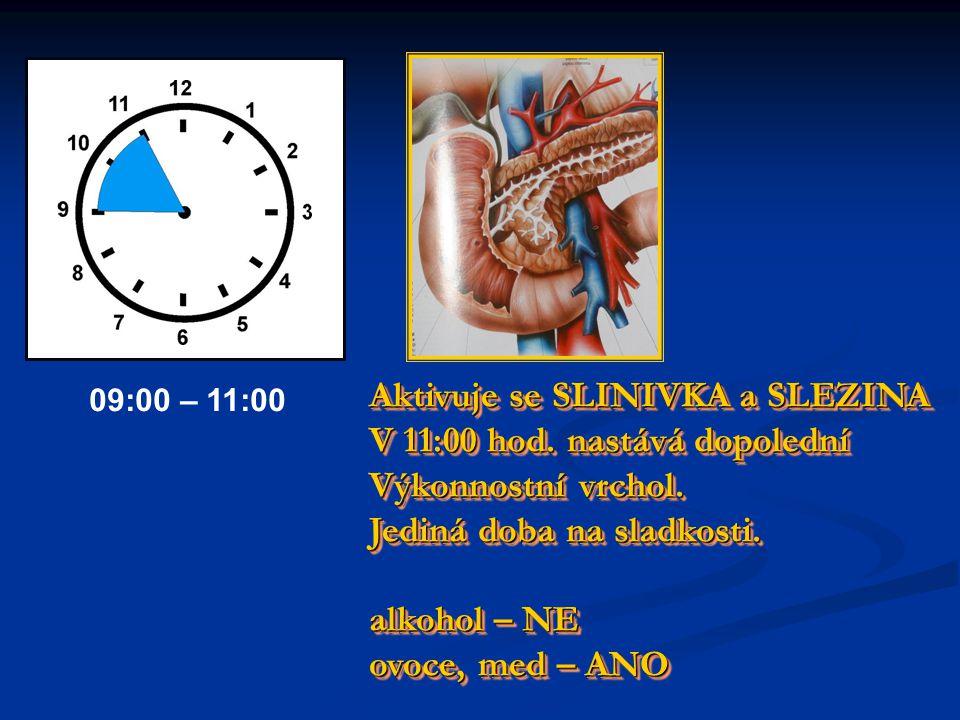 Aktivuje se SLINIVKA a SLEZINA V 11:00 hod. nastává dopolední