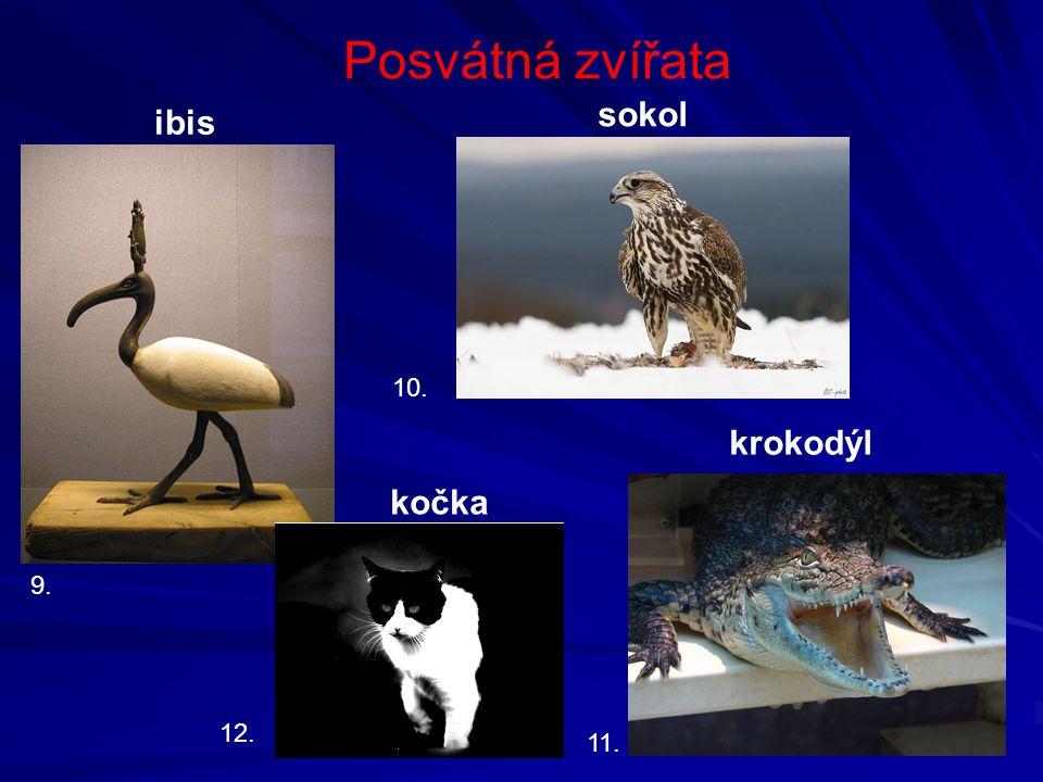 Posvátná zvířata sokol ibis 10. krokodýl kočka 9. 12. 11.