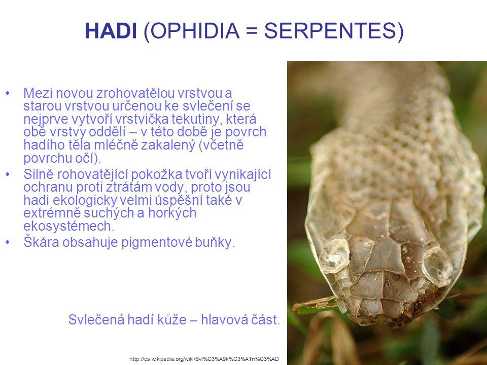 HADI (OPHIDIA = SERPENTES)