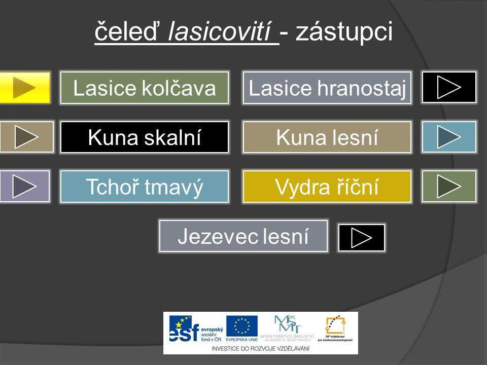 čeleď lasicovití - zástupci