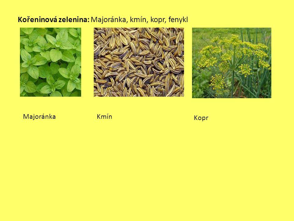 Kořeninová zelenina: Majoránka, kmín, kopr, fenykl