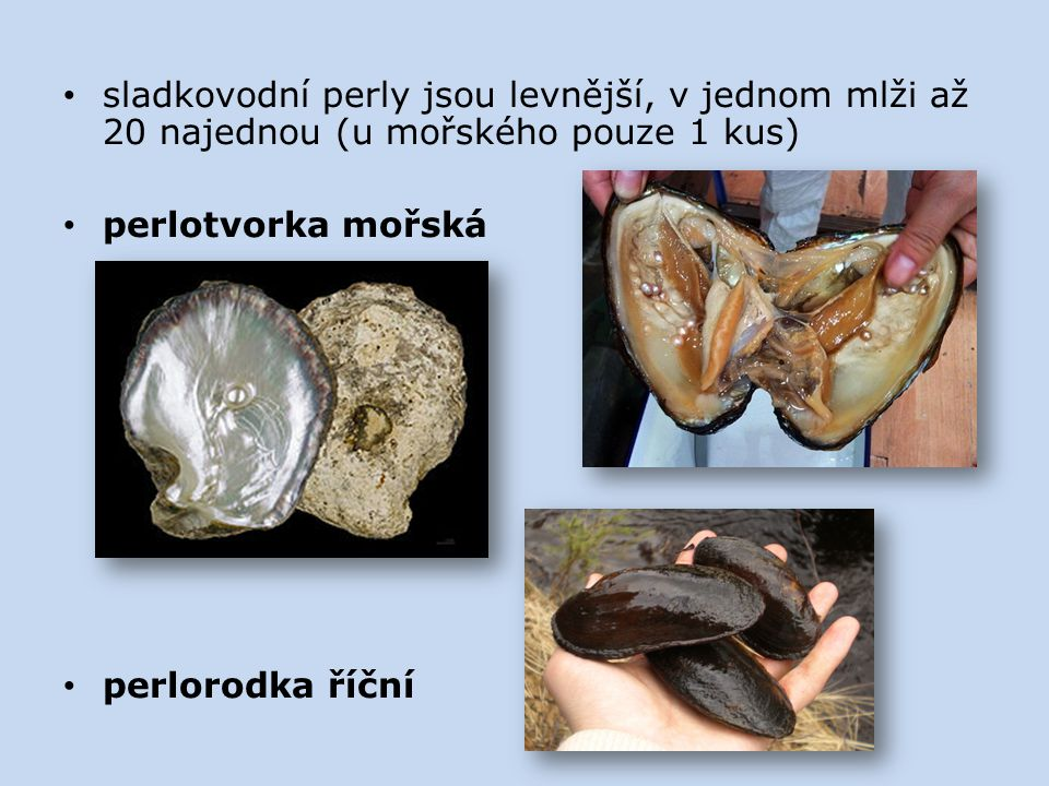sladkovodní perly jsou levnější, v jednom mlži až 20 najednou (u mořského pouze 1 kus)