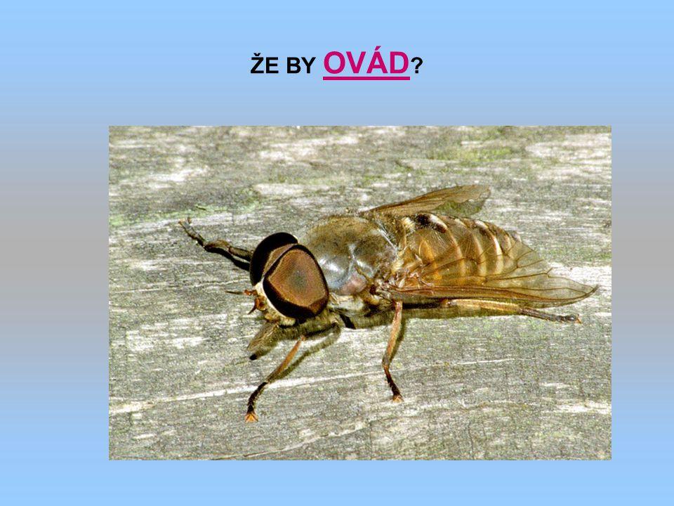 ŽE BY OVÁD