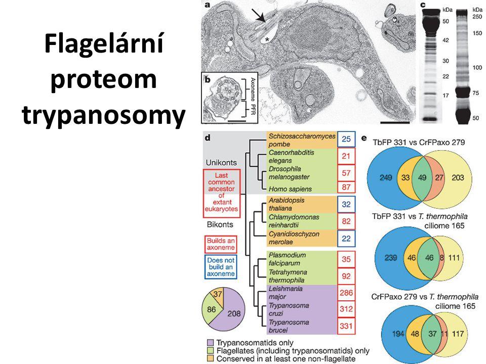 Flagelární proteom trypanosomy