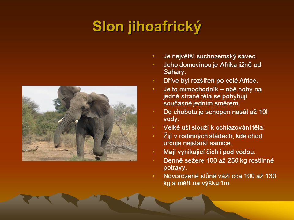 Slon jihoafrický Je největší suchozemský savec.