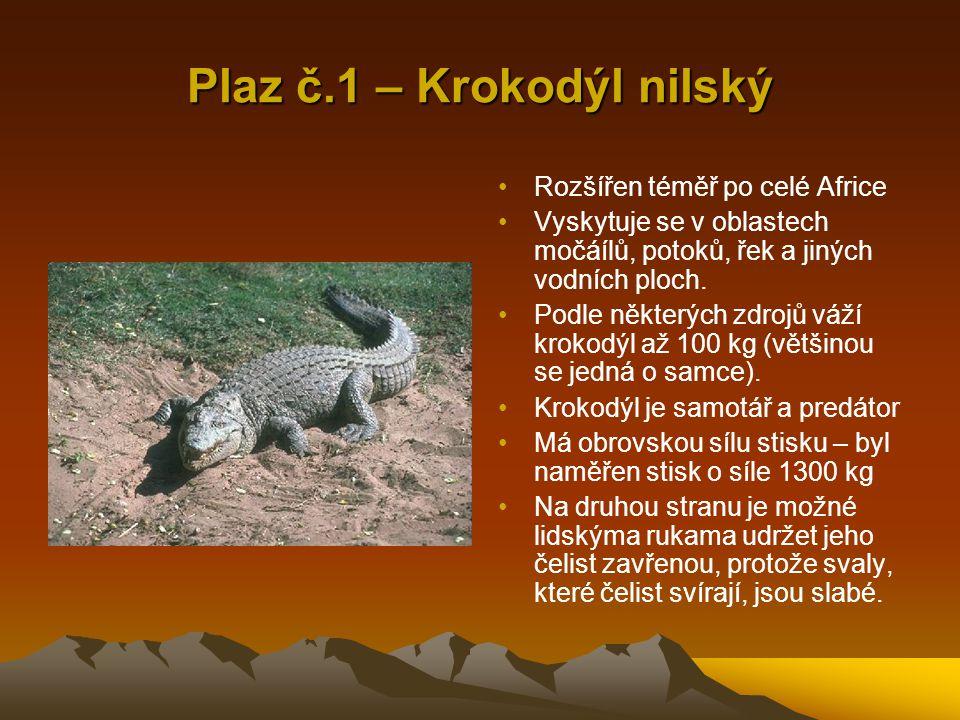 Plaz č.1 – Krokodýl nilský