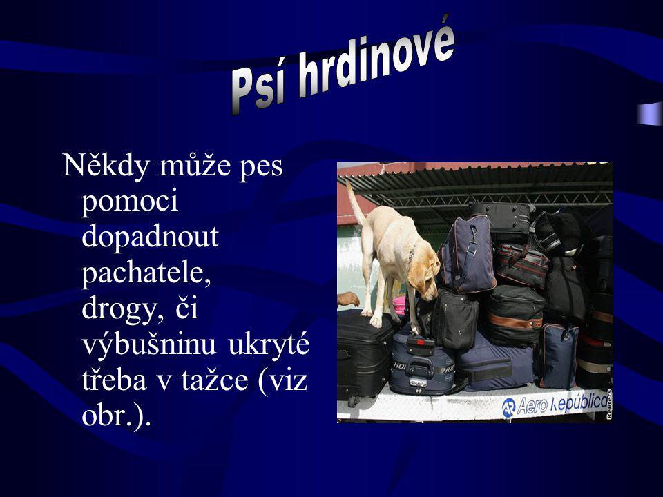 Psí hrdinové Někdy může pes pomoci dopadnout pachatele, drogy, či výbušninu ukryté třeba v tažce (viz obr.).