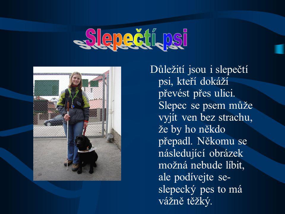 Slepečtí psi