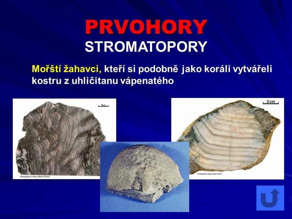 PRVOHORY STROMATOPORY