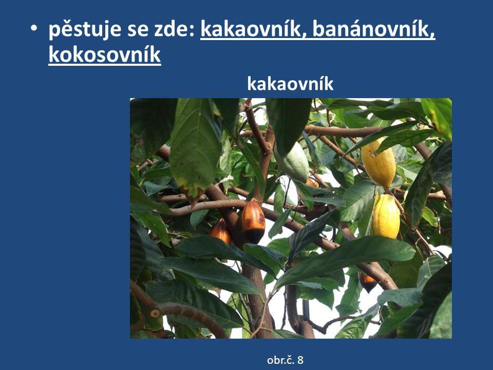 pěstuje se zde: kakaovník, banánovník, kokosovník