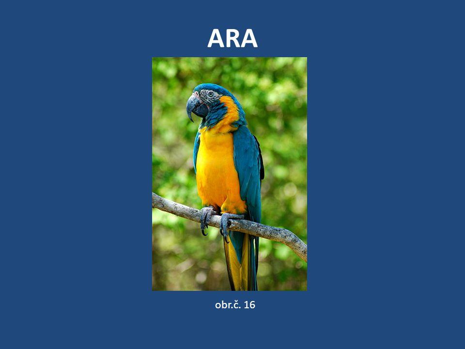ARA obr.č. 16