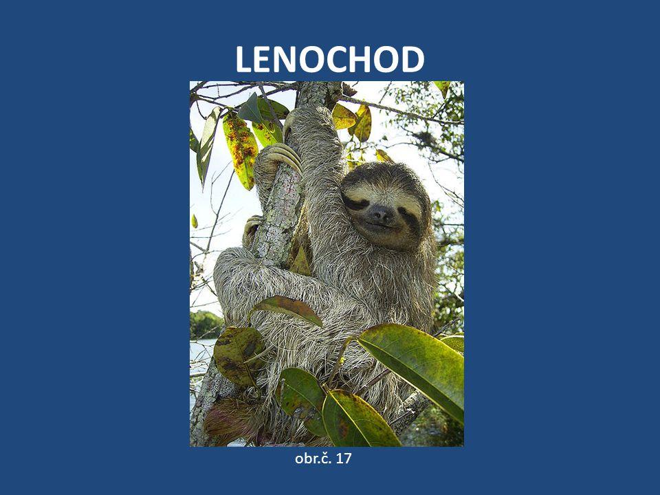LENOCHOD obr.č. 17