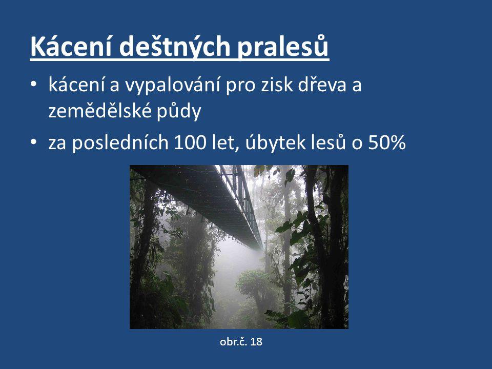 Kácení deštných pralesů