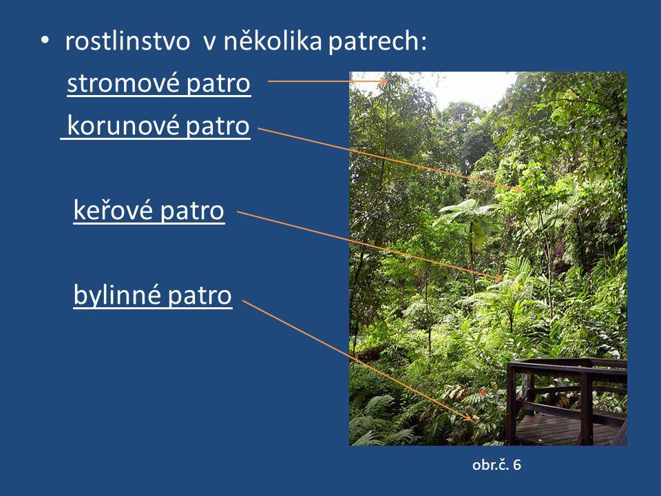 rostlinstvo v několika patrech: stromové patro korunové patro