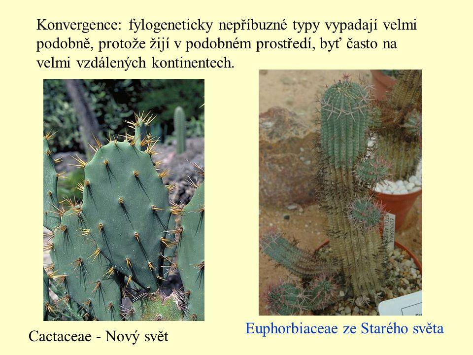 Konvergence: fylogeneticky nepříbuzné typy vypadají velmi podobně, protože žijí v podobném prostředí, byť často na velmi vzdálených kontinentech.