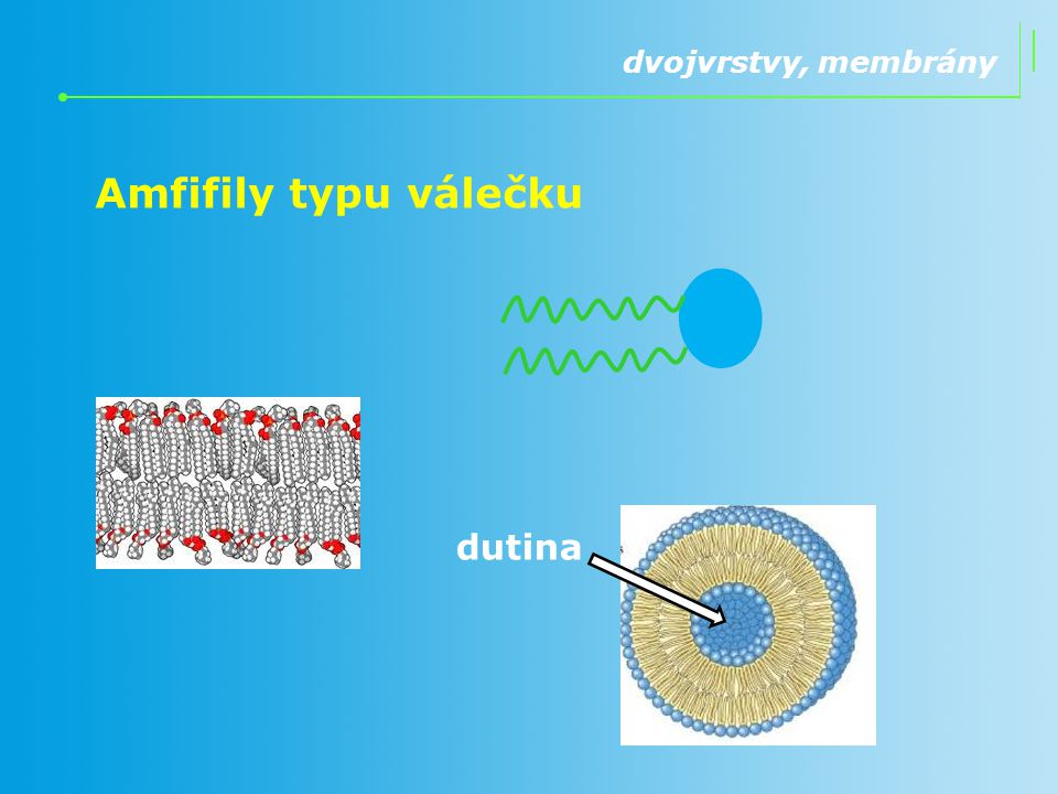 dvojvrstvy, membrány Amfifily typu válečku dutina