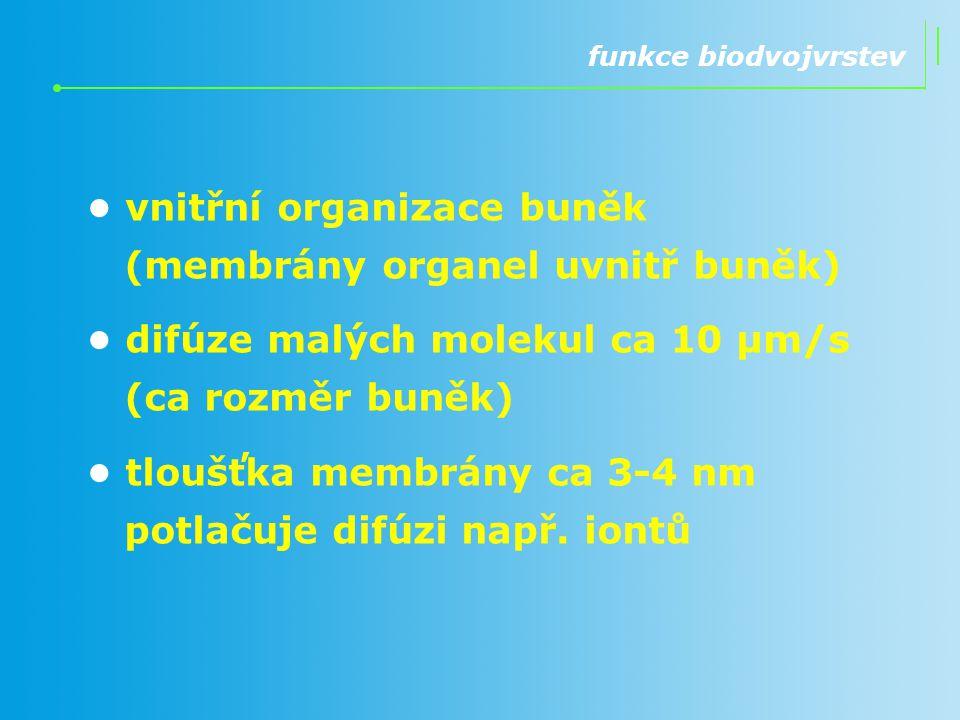 • vnitřní organizace buněk (membrány organel uvnitř buněk)