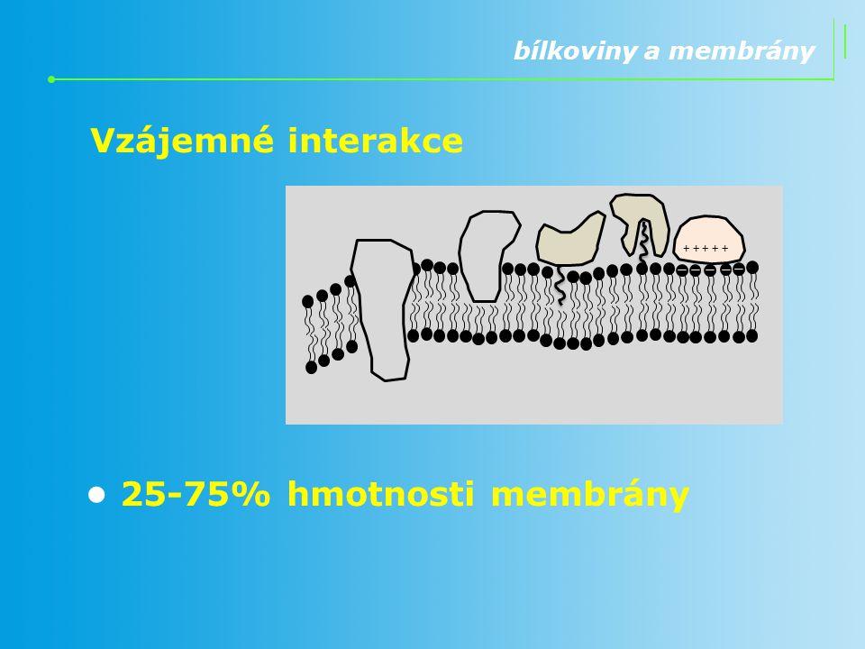 • 25-75% hmotnosti membrány