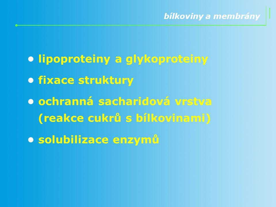 • lipoproteiny a glykoproteiny • fixace struktury