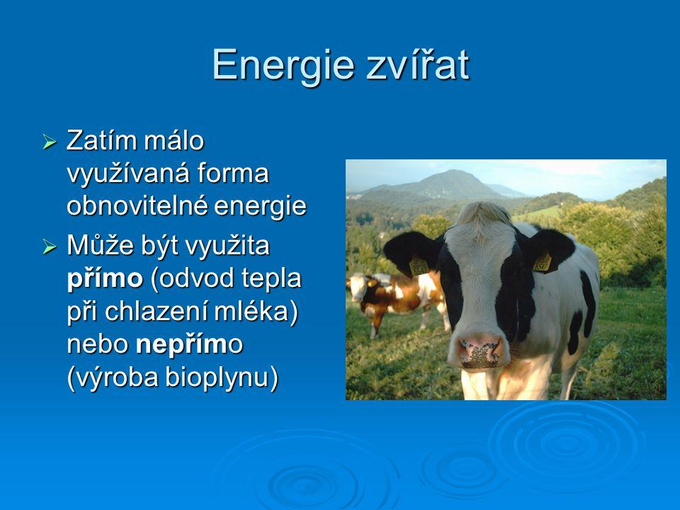 Energie zvířat Zatím málo využívaná forma obnovitelné energie