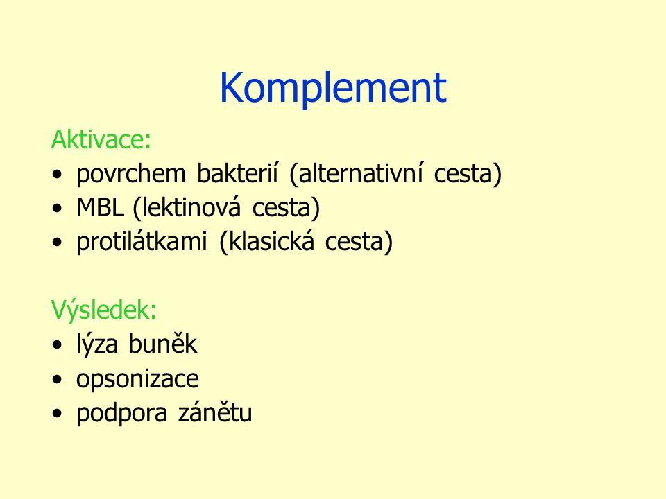 Komplement Aktivace: povrchem bakterií (alternativní cesta)