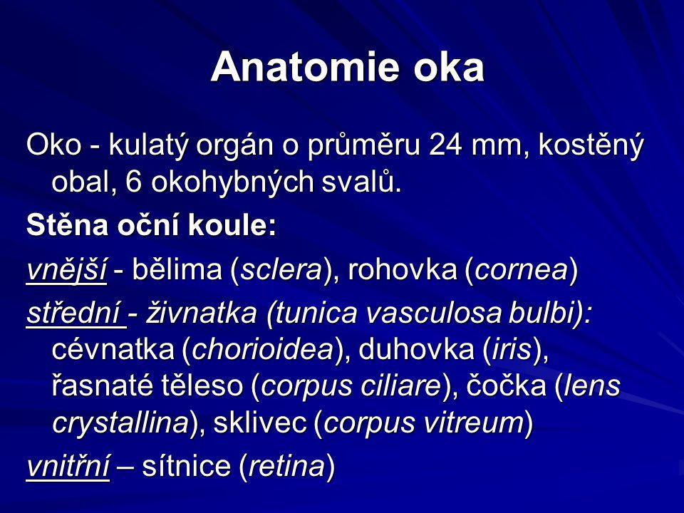 Anatomie oka Oko - kulatý orgán o průměru 24 mm, kostěný obal, 6 okohybných svalů. Stěna oční koule:
