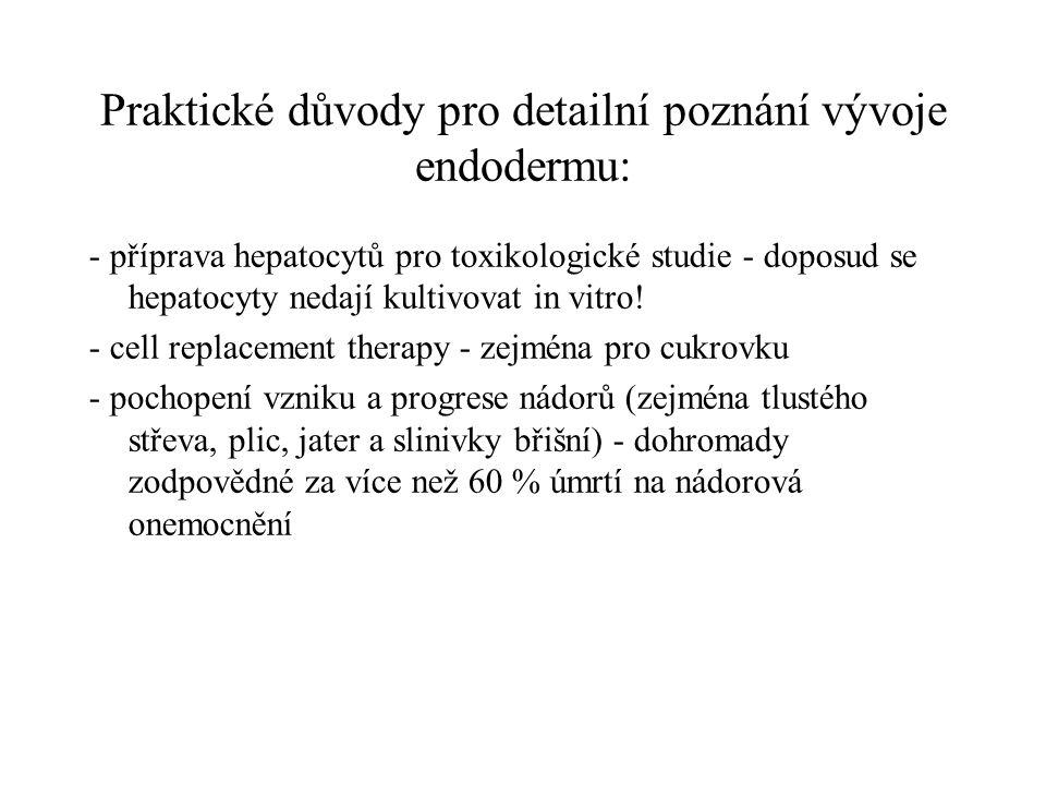 Praktické důvody pro detailní poznání vývoje endodermu:
