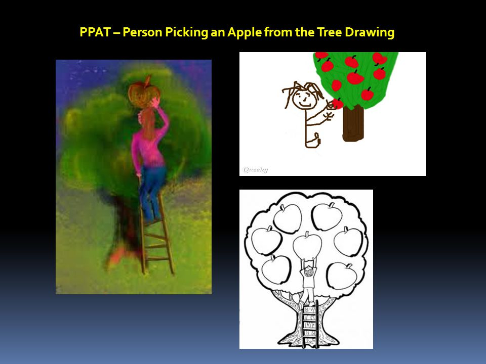 PPAT – Person Picking an Apple from the Tree Drawing