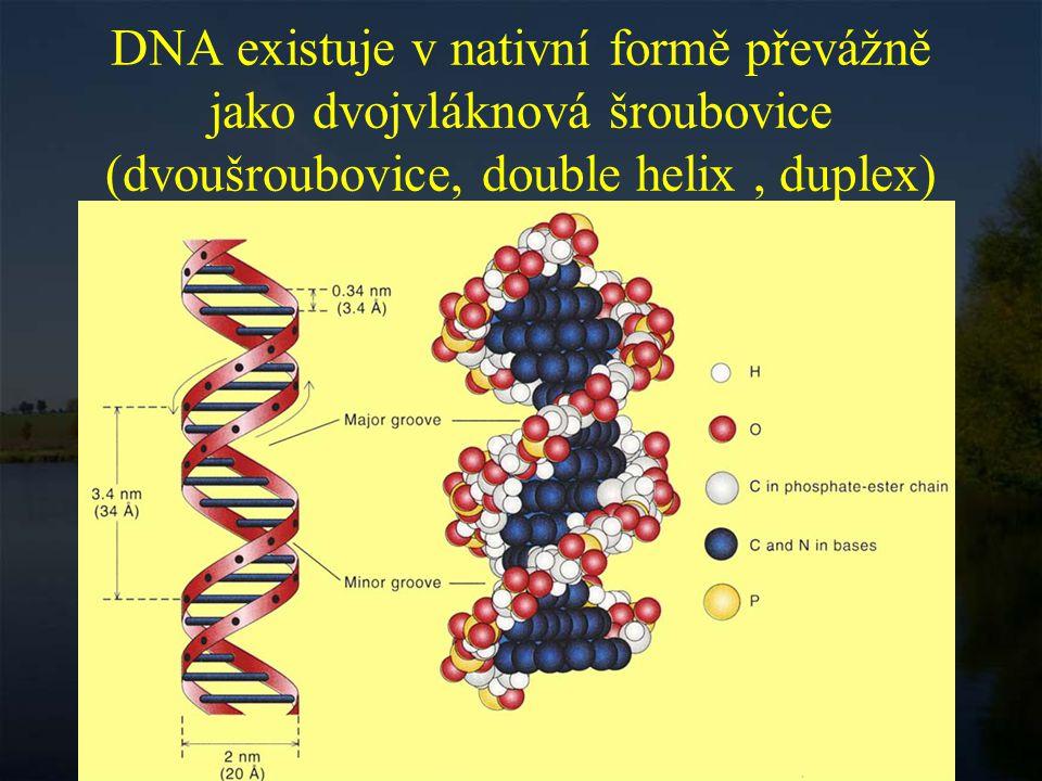 DNA existuje v nativní formě převážně jako dvojvláknová šroubovice (dvoušroubovice, double helix , duplex)
