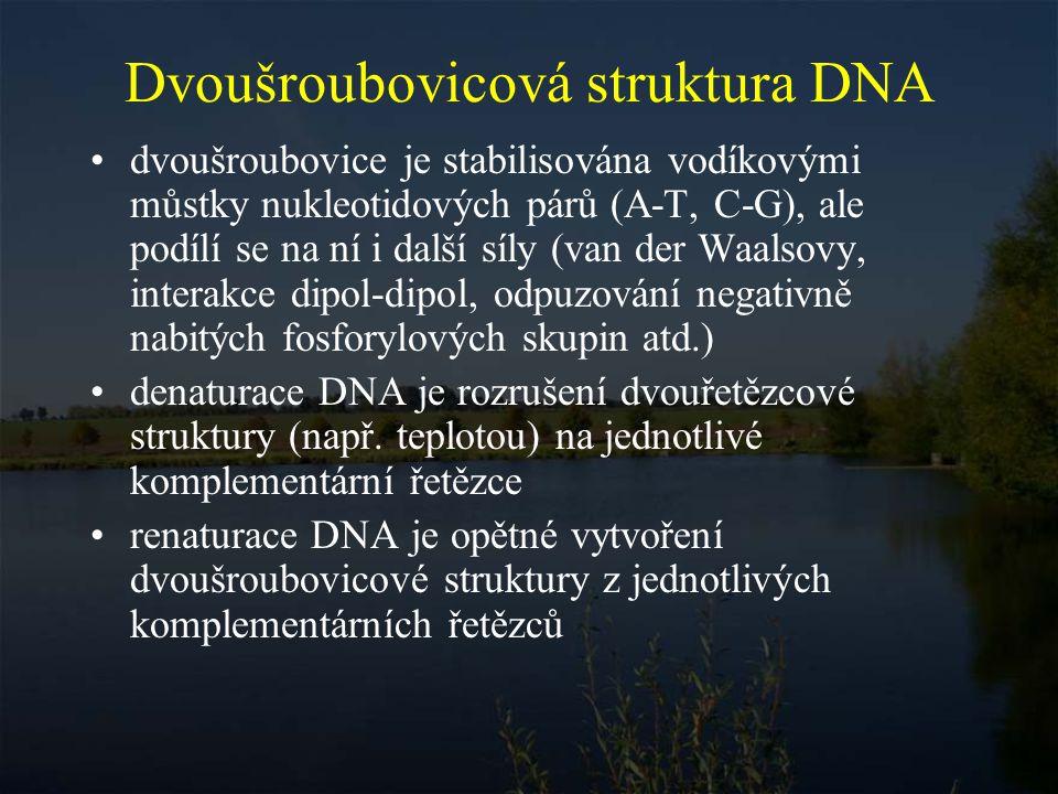 Dvoušroubovicová struktura DNA