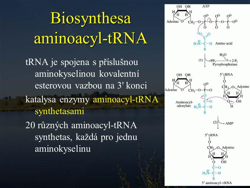 Biosynthesa aminoacyl-tRNA